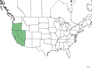 asclepias cordifolia native range