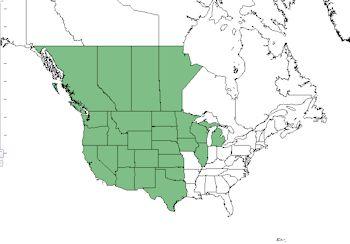 asclepias speciosa native range