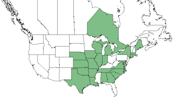 pale purple coneflower native range