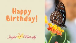 joyful butterfly birthday gift certificate