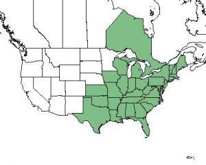 Sassafras Native map